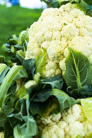 Display of cauliflower heads at local farmers market for sale