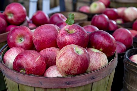 bushel: Fresh picked red apples in bushel baskets on display at local farmers market