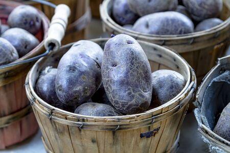 bushel: Close up of farm fresh purple potatoes in brown bushel baskets for sale at farmers market