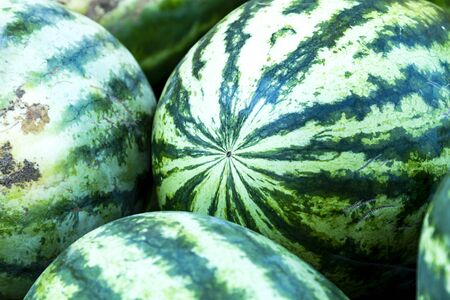 Fresh picked whole seedless watermelons for sale at local farmers market
