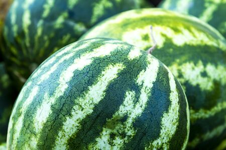 variegated: Seedless watermelons on display for sale at local farmers market Stock Photo