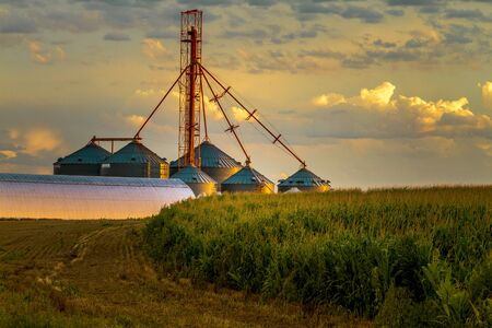 grain fields: Agricultural silos with grain elevator in rural setting with corn fields as sun sets to west