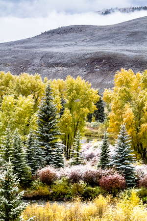 Snowy autumn mountain scene with trees in full fall color during early season snowstorm with mountainside is background Stock Photo