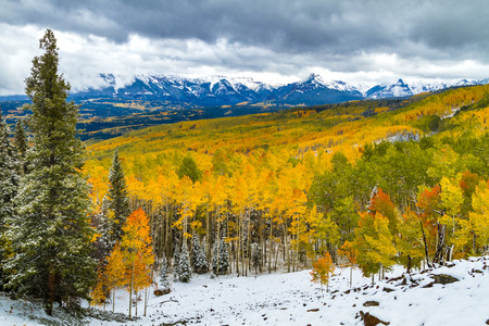 Ohio Pass near Crested Butte Colorado filled with changing yellow, orange and green Aspen trees covered with snow from early season snowstorm with snow covered peaks in distance