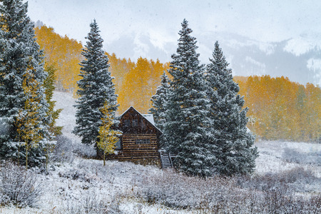 covered in snow: Abandoned cabin in early season snowstorm surrounded by snow covered pine trees and Aspen trees in full autumn color on mountainside in background Stock Photo