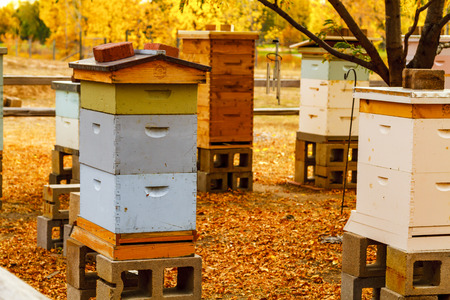 Colorful aged wooden bee hives in autumn setting with brilliant fall color and fallen leaves