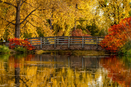 arching: Gorgeous fall scene of brilliant fall color reflecting in small pond with bridge arching over water