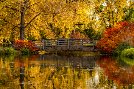 arching: Autumn scene brilliant of fall color reflecting in small pond with bridge arching over water