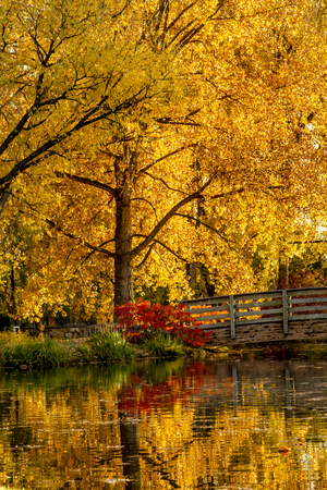 bridge over water: Brilliant autumn color of changing leaves reflecting in small pond with wooden bridge over water Stock Photo