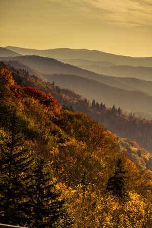 Colorful mountainsides filled with fall color in early morning light in Great Smoky Mountains National Park
