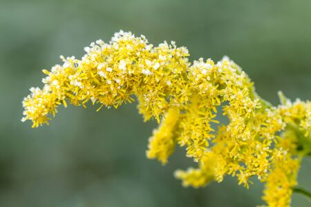 ice crystals: Close up of yellow flower with ice crystals on frosty morning