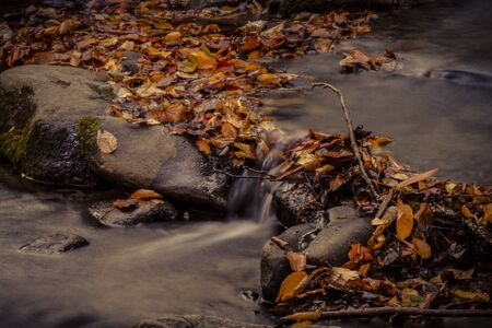Cascading water in small stream surrounded by fallen leaves during autumn season