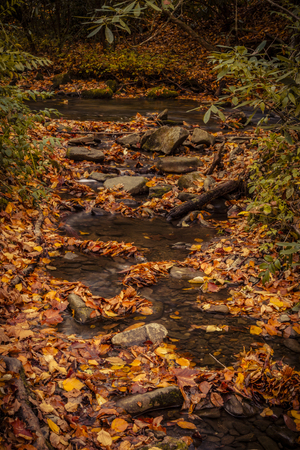 great smokies: Small waterfall in stream surrounded by fallen leaves during autumn season in mountain forest Stock Photo