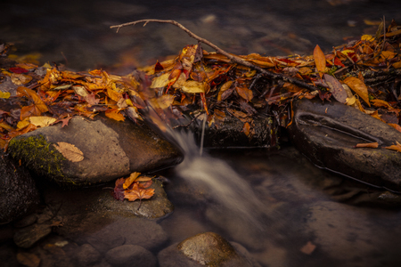 great smokies: Close up of small waterfall in stream surrounded by fallen leaves during autumn season in mountain forest