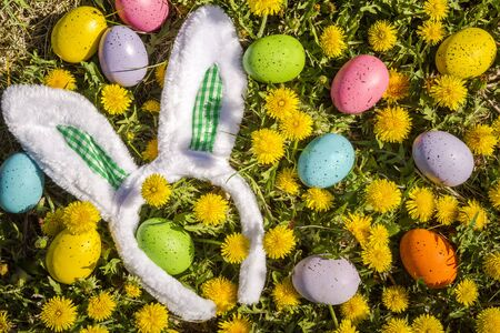 Fuzzy Easter bunny ears with green gingham checks sitting in grass surrounded with colored Easter eggs and dandelion flowers Stock Photo