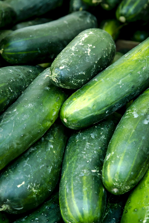 Fresh organic cucumbers for sale at local farmers market