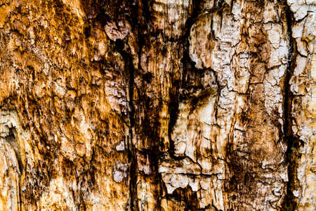 corrosion: Textured background of wooden tree bark