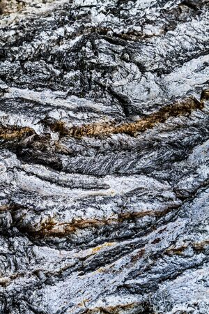 corrosion: Abstract textured background of bark of an aged tree Stock Photo