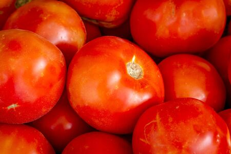 Close up of fresh picked organic red tomatoes sitting in bin at local farmers