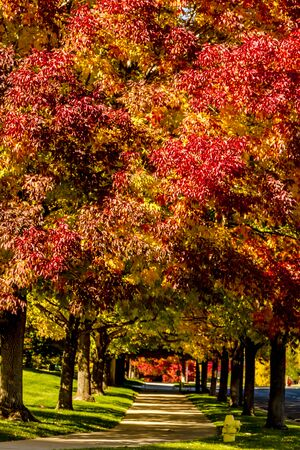 Sidewalk lined with trees with vibrant colors of changing leaves on sunny afternoon