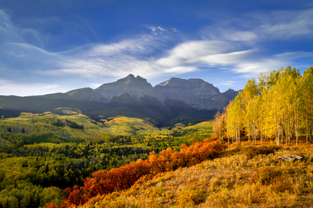Sunny fall morning over mountain valley filled with changing aspen trees in the San Juan mountains near Ridgway Colorado