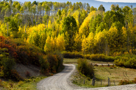 Forest road in the mountains of Colorado on sunny fall morning