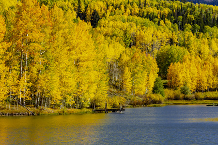 Close up of pier on high mountain lake surrounded by yellow aspen trees on fall afternoon 免版税图像