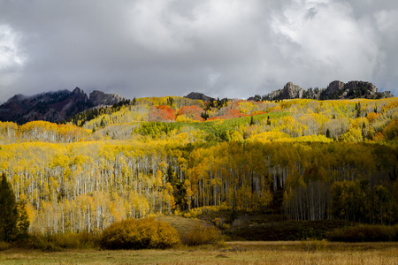 Yellow and orange aspen trees on mountain side in full fall color on sunny afternoon with rocky peaks and dramatic clouds Stockfoto