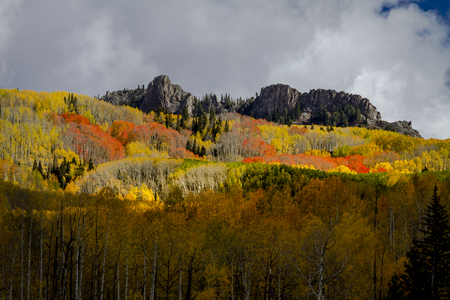 Mountain side of yellow and orange aspen trees in full fall color with rocky mountain peaks on sunny autumn afternoon