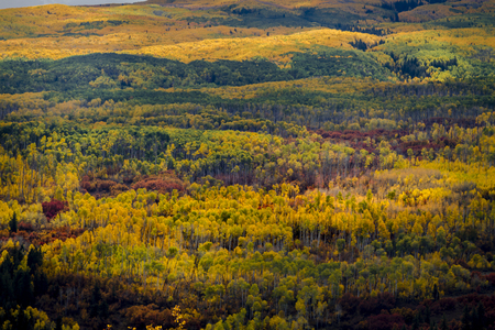 Mountain valley filled with changing yellow aspen trees and orange scrub oak with bands of sunlight Stockfoto