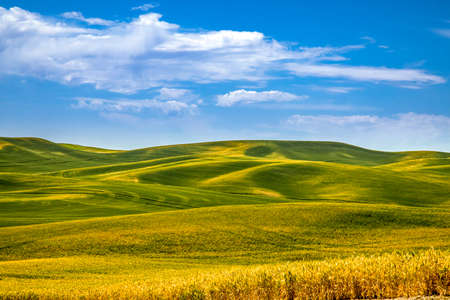Summer blue skies over rolling fields of argricuture fields in eastern Washington State in the Palouse region Banque d'images