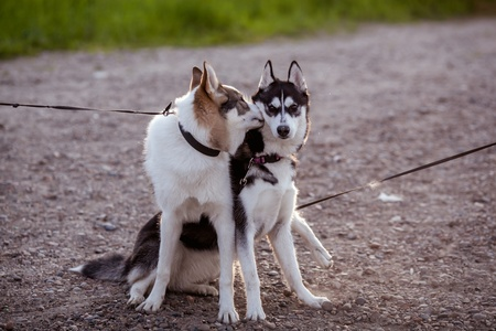 two dogs walking Stock Photo