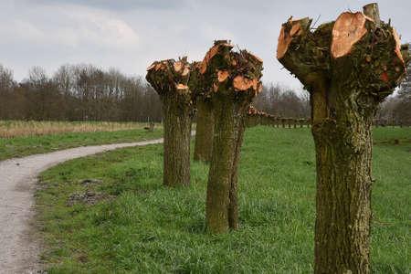 freaked: willows Stock Photo