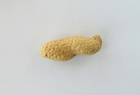 durability: Peanuts in the shell on a white background