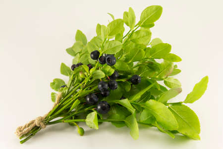 sprigs: Sprigs of blueberries on a white background