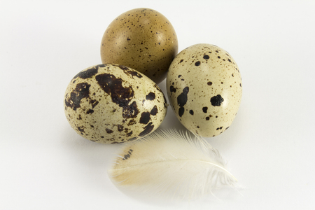 lecithin: Type of quail eggs and quail feather on a white background