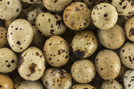lecithin: Abstract view of the quail eggs Stock Photo