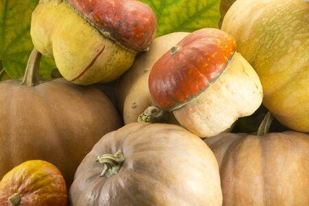 varieties: Different varieties of pumpkins on a background of maple leaves