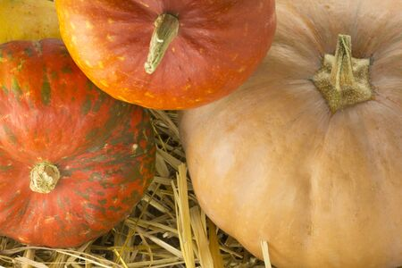 cluster: Different types of pumpkins on a background of straw cluster