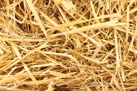 haulm: Cluster straw, truss straw - abstract background top view Stock Photo