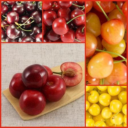 Collage from different varieties of sweet cherry (colorful) - square