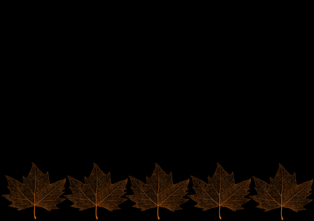 Template with maple leaf on an black background.  Maple leaf patch.
