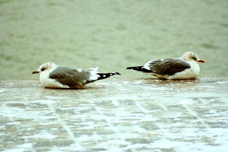 resentment: Resentment, quarrel, divorce. Gulls.
