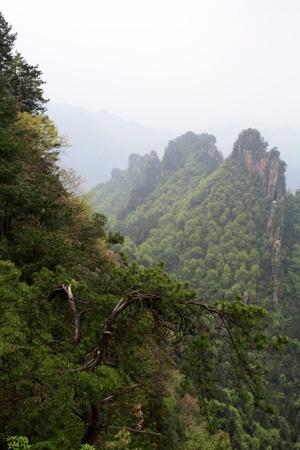 Mountains of Zhangjiajie, Hunan Province, China Stock Photo - 13565399
