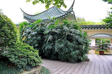 In Elling park, Chongqing China