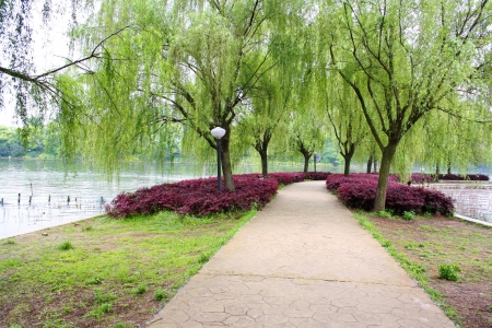 Landscape of chinese park. Changsha city. China is.