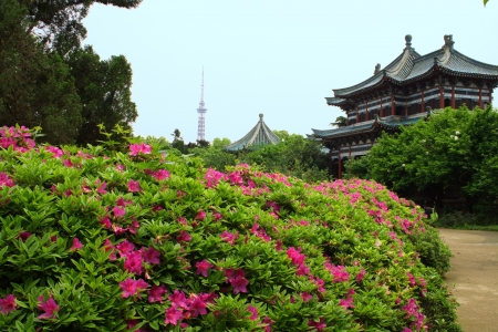 Landscape of chinese park  Changsha city  Province of Hunan  China is