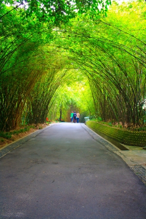 healthy path: Landscapes of chinese park. Chengdu city. China.  Stock Photo