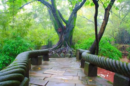 Mistige dag in het Chinees park. Chongqing City, China.