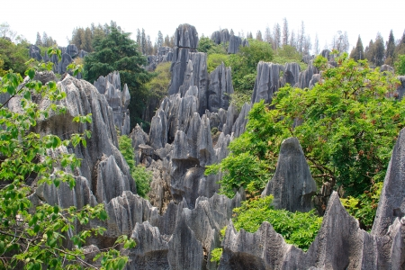 Shi Lin Stone Forest National Park in de provincie Yunnan, China Stockfoto